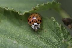 Ladybug's shelter