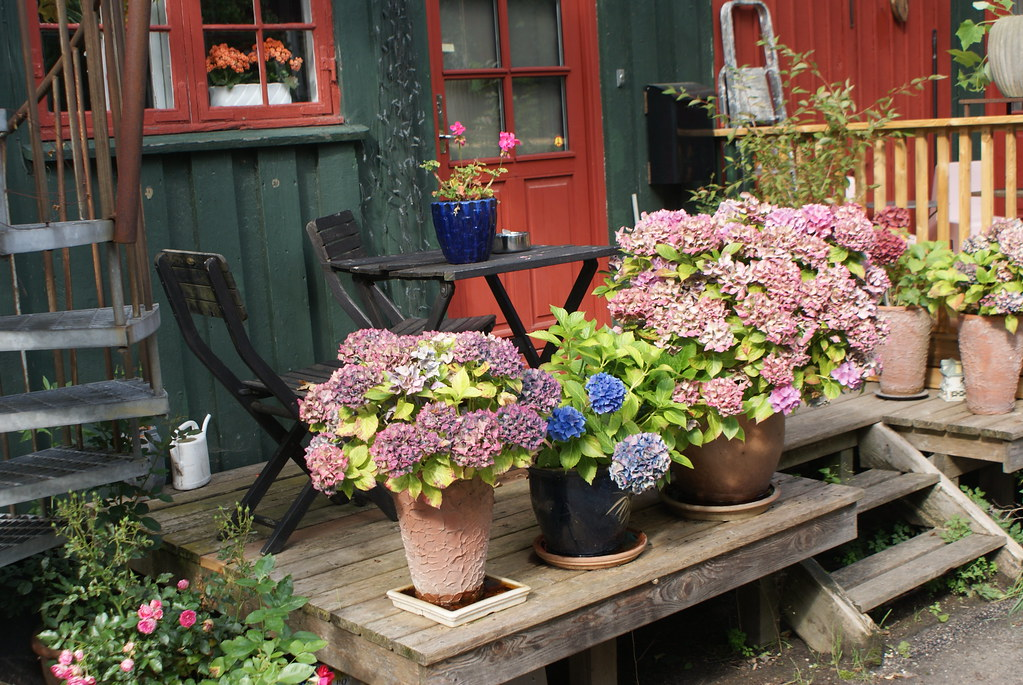 Hortensias devant une maison du village de Christiania.