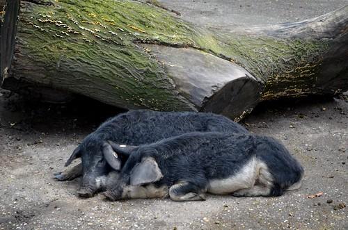 Tierpark Oberhausen