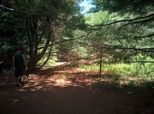 Haunted Woods Trail (7) #pei #princeedwardisland #cavendish #hauntedwoodstrail #greengables