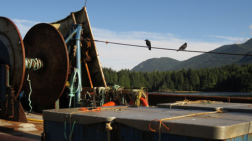 Bird on a wire on a boat in Ucluelet