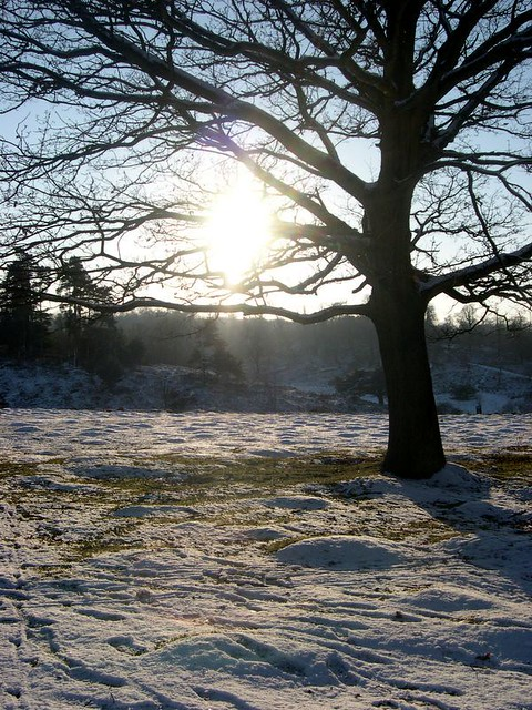 Winter sunset Knowle Park
