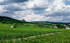 Rhein winery