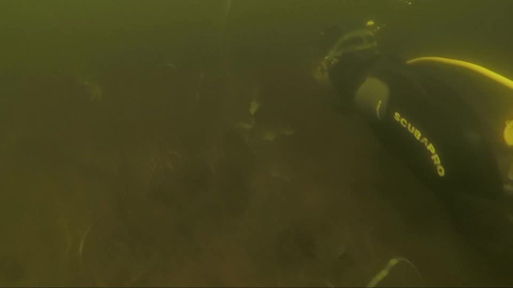 AIS Management, removing Variable Leaf Milfoil from Long Lake, NY