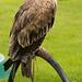 International Birds of Prey Centre (2)