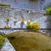 Via Angelicchio 15. Vegetazione sul parapetto.