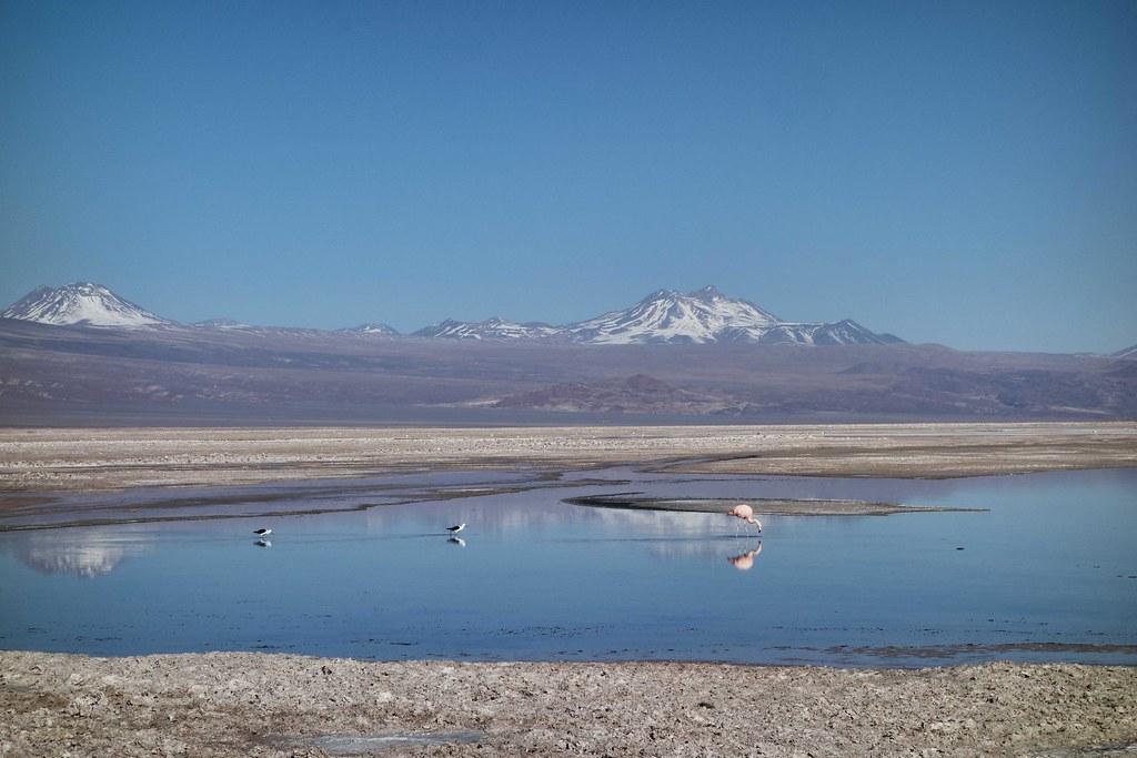 San Pedro Atacama - Piedras Rojas - Laguna Chaxa - Flamingo