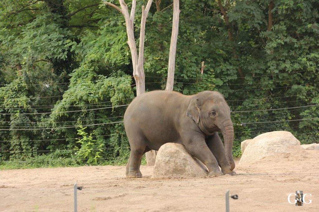 Besuch Zoo Berlin 13.08.174