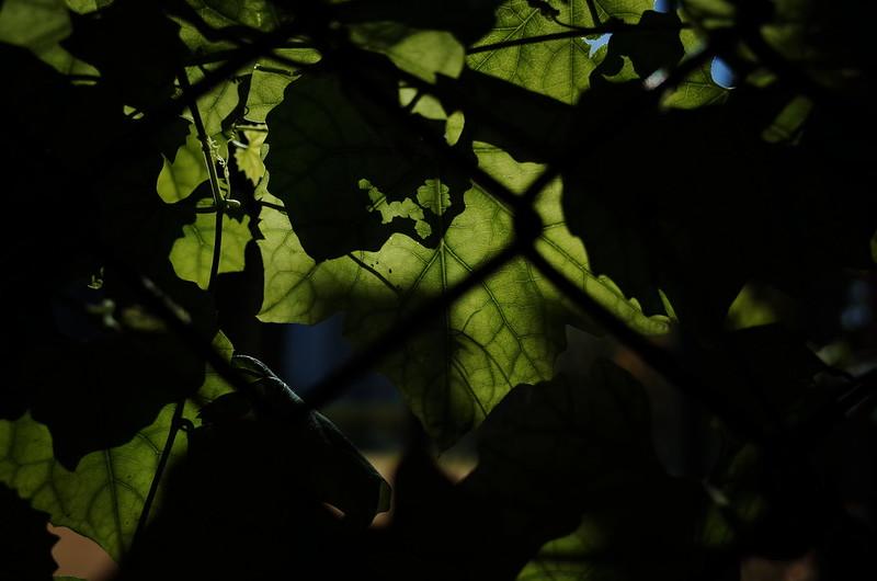 葉に覆われる