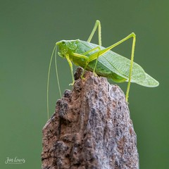 Grasshopper?