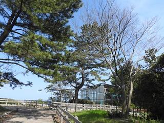 ひたち海浜公園 グラスハウス05