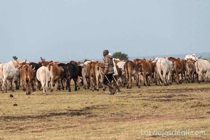 Masai Mara pastores masai