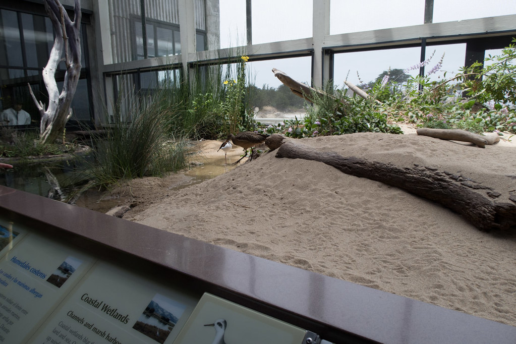 Sandy Shore & Aviary Exhibit
