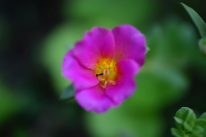 an ant and a flower