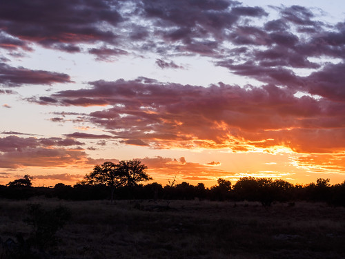 chobe paysage sunset nature coucherdesoleil réservenature juillet savuti hiver botswana northwestdistrict bw