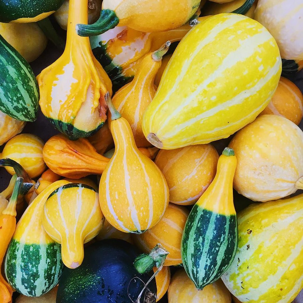 Colorful pumpkin