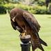 International Birds of Prey Centre (85)