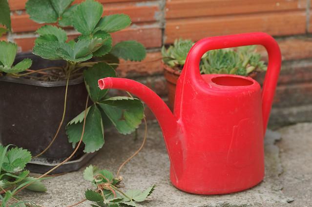 Little Red Bucket