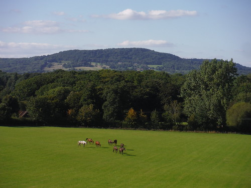 Horses in Field and Black Down