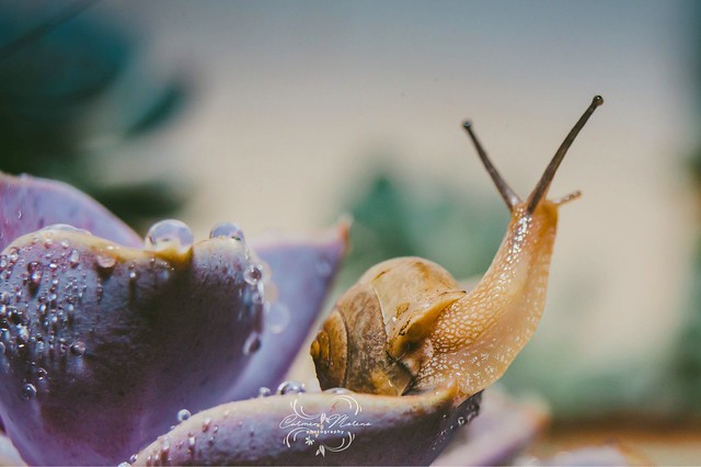 The snail and the succulent