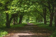 Shadowy Park