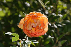 062317 Red Butte Gardens 003