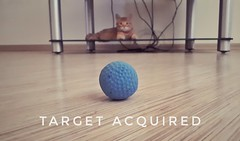 target acquired by masha