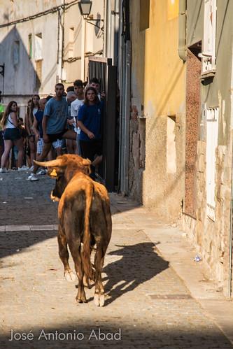 Vaquillas, Martín del Río