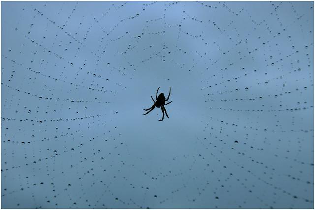 Spider in the web, Sony SLT-A65V, Tamron 16-300mm F3.5-6.3 Di II PZD