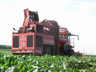 Holmer Terrados T3-099