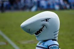 Sharks v Knights Round 5 2017_131