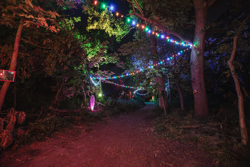 The Forest | Hullabaloo 2017