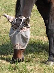 Danada Equestrian Center and Forest Preserve
