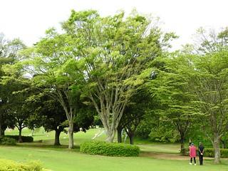 昭和の森 2 木々 03