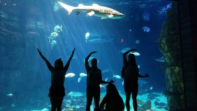Saturday, August 5: Virginia aquarium