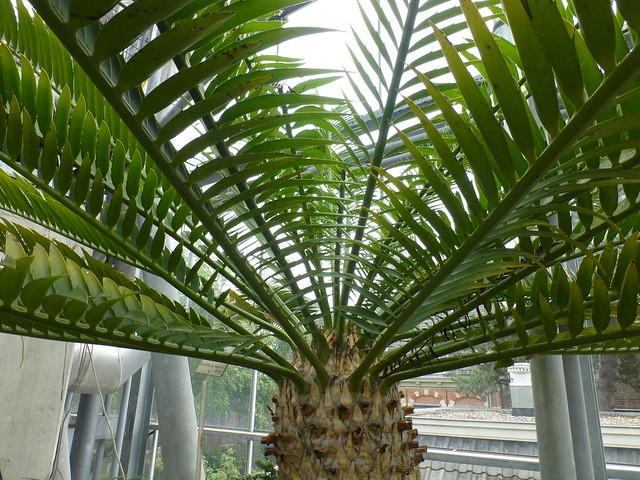 Hortus Botanicus Leiden 2017, Panasonic DMC-TZ30