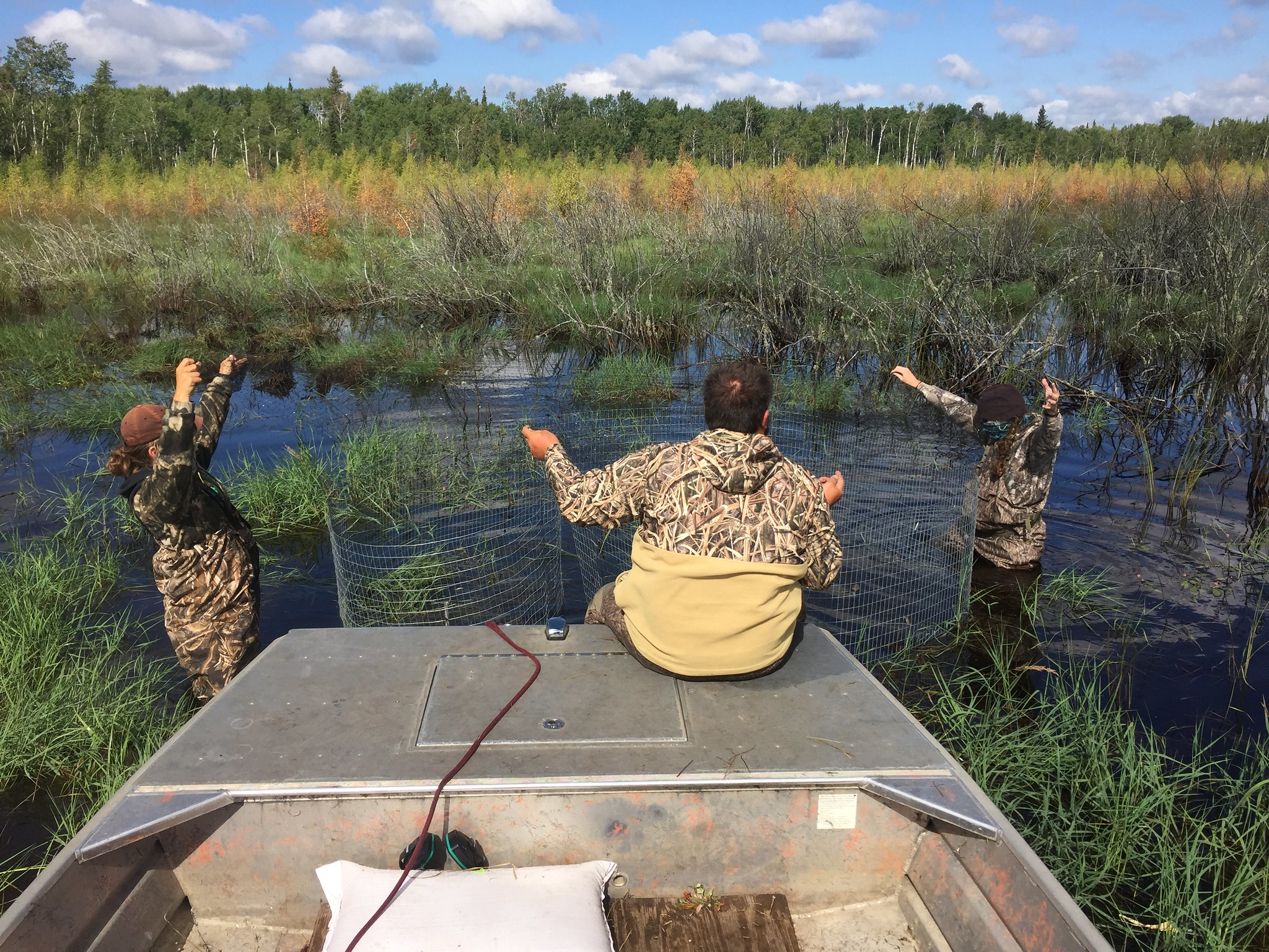 Setting a trap from the airboat in deeper than normal water
