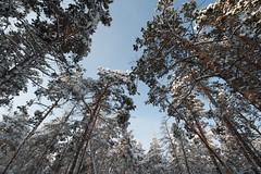 Russia 2017 - Yakutia - Yakutsk - 005FL.jpg