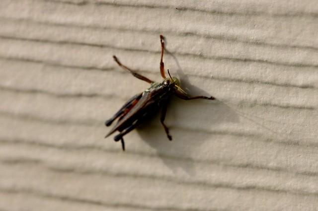 Unfocused Grasshopper