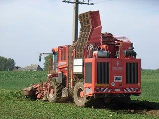 Holmer Terrados T3-254