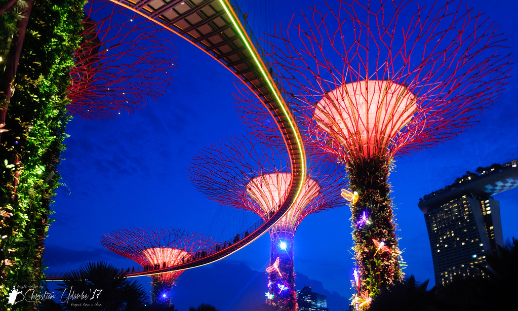 The Gardens by the Bay OCBC Skyway at