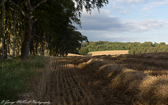 Straw and Beech