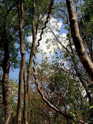 affenleiter barrahonda costarica guanacaste