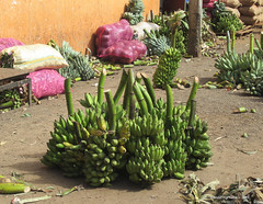 Green Bananas - Wholesale Fruit & Vegetable Market - Dambulla Sri Lanka