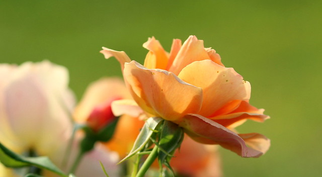 Orange smile in the morning light