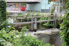1323 Projekt Seevekanal 2021 – KanalTag 2017;  Schulprojekt / Bezirksamt / Anwohner informieren über die ökologischen Maßnahmen am Seevekanal in Hamburg Harburg  vor dem Phoenix Center.