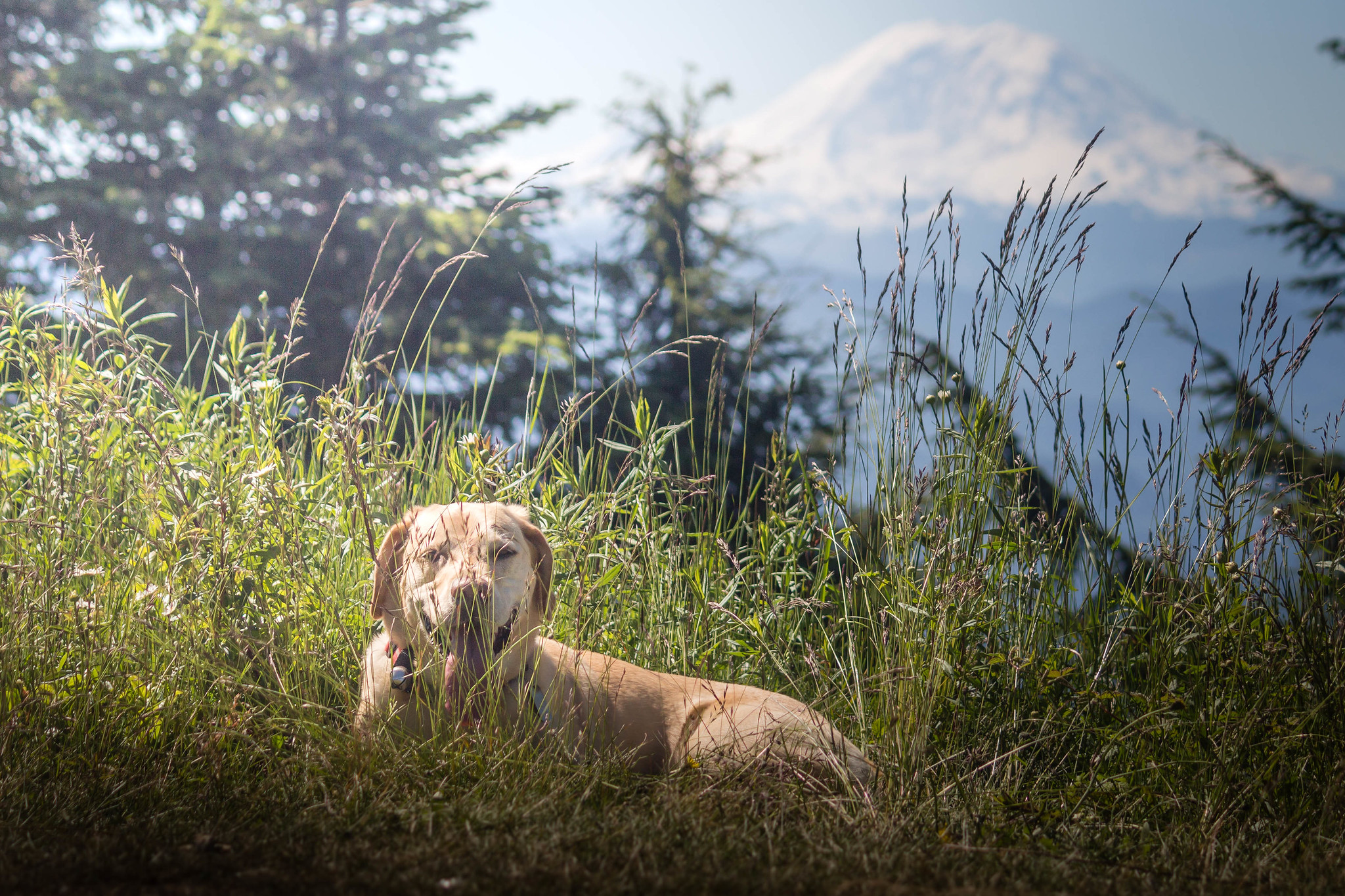 Summit dogs on East Tiger Mountain
