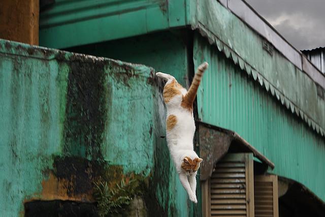 Teal Leap