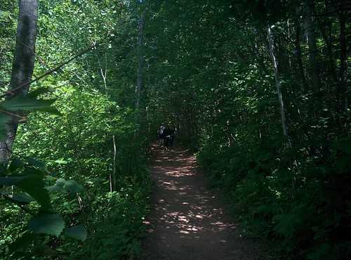 Haunted Woods Trail (4) #pei #princeedwardisland #cavendish #hauntedwoodstrail #greengables