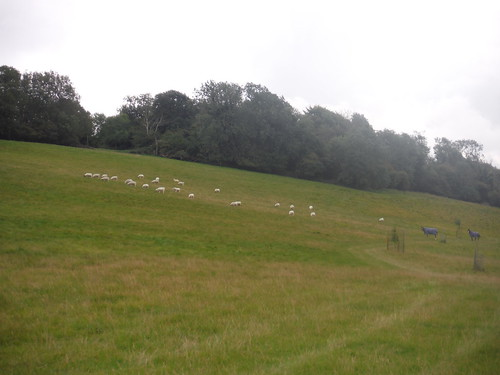 Sheep and Horses on Coombe by Coombe Manor
